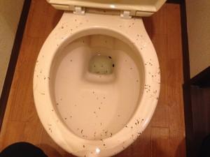洋式トイレの掃除前