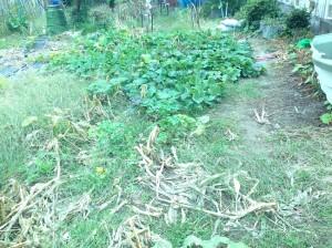 畑の草刈り前2
