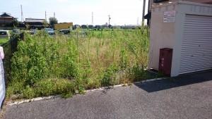 アパート敷地の除草前1