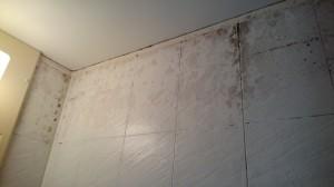 浴室清掃前(カビ汚れ等)