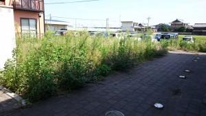 アパート敷地の除草前2